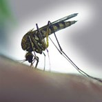 Business and leisure travellers visiting Brazil warned on significant rise of Yellow Fever